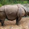 Kenya hentikan pemindahan badak hitam ke habitat baru